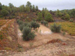 Ανυπολόγιστες ζημιές σε αμπελώνες και ελαιώνες της Κρήτης