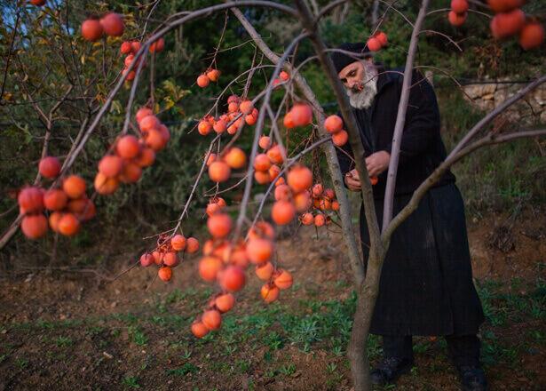 Αγιορείτικη κουζίνα: Στα άδυτα των μοναστηριακών γεύσεων