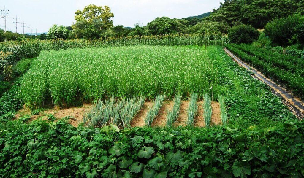 Στο επίκεντρο η βιολογική γεωργία στην Ελλάδα