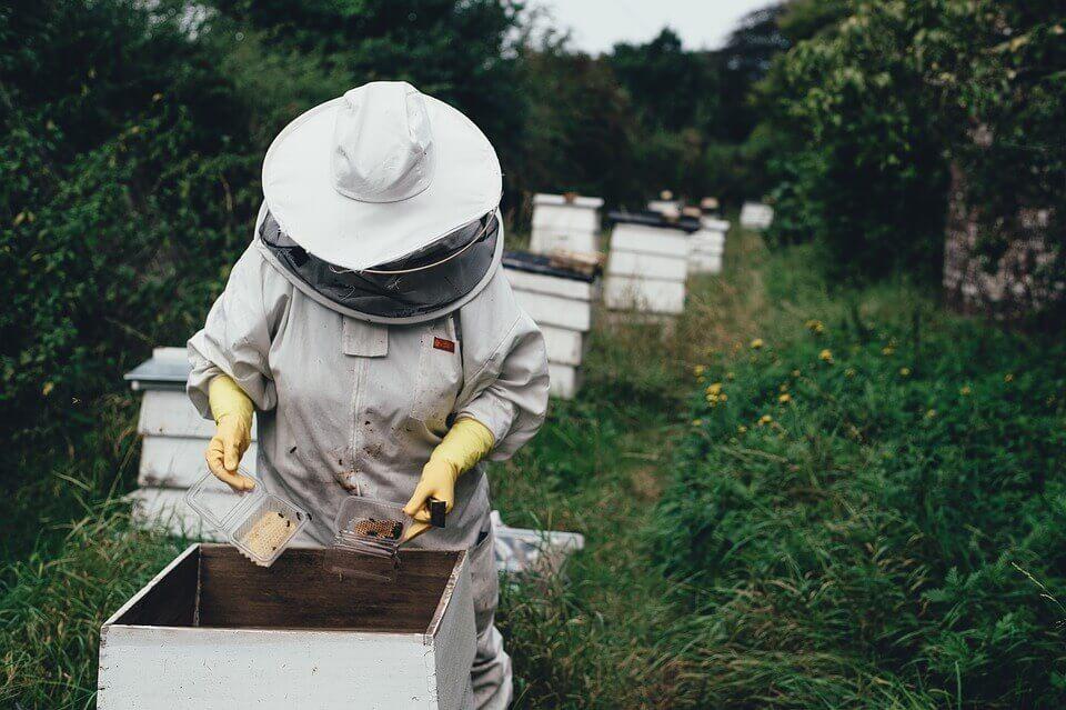 Μέλι σε σκόνη: Μια ενδιαφέρουσα ανακάλυψη με ευεργετικές ιδιότητες