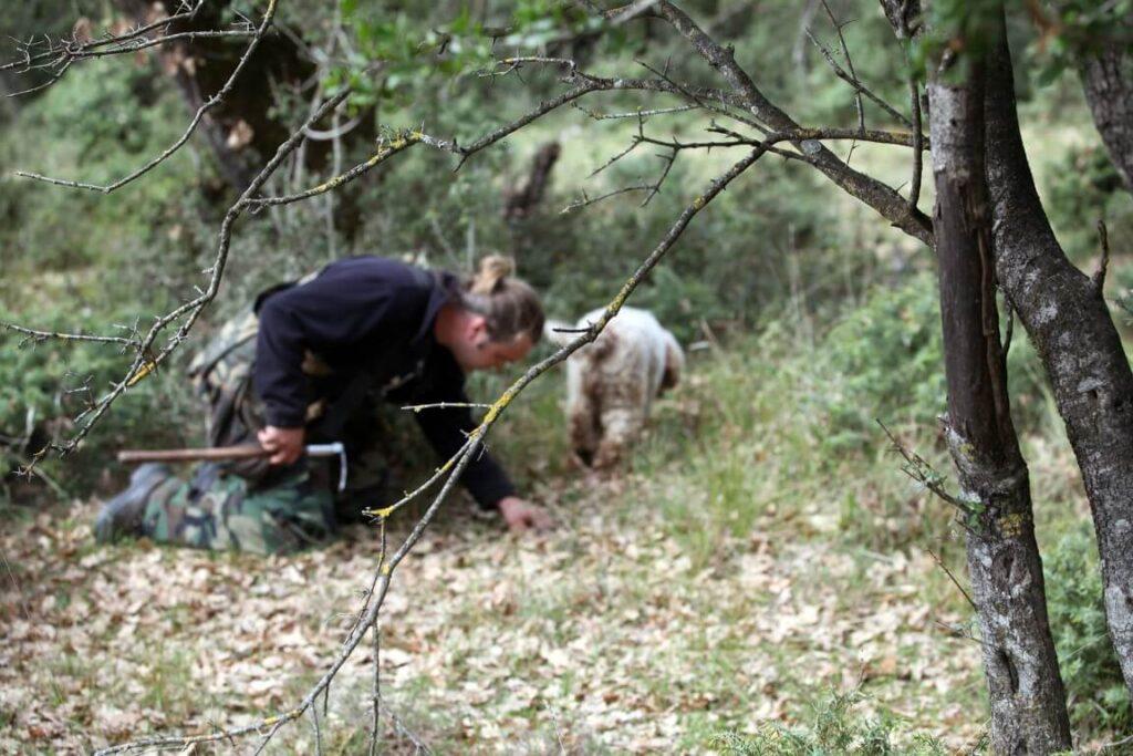 Κυνήγι τρούφας για τους απανταχού μανιταρόφιλους