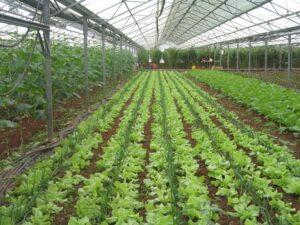 ΚΠΙΣΝ: Βιολογική γεωργία και ασφάλεια τροφίμων... απ' το χωράφι στο ράφι