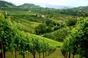 Η Ιταλία εξακολουθεί να είναι η πρώτη περιοχή κατανάλωσης Prosecco