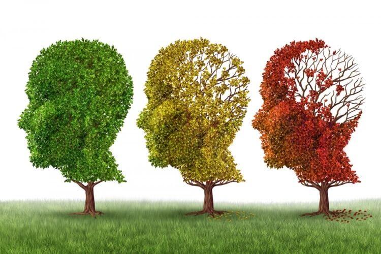 Το ελαιόλαδο προστατεύει τον εγκέφαλο από τη νόσο Alzheimer