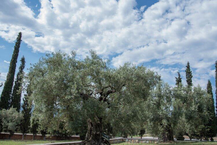 Το Μοναστήρι της Ορμύλιας αποτελεί φάρο της Ορθοδοξίας