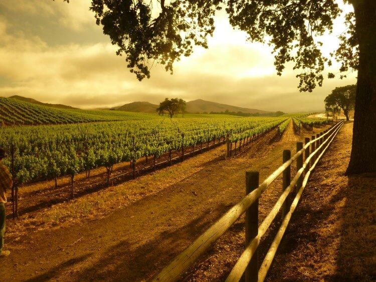 Παρά την εξαιρετική ποιότητα του ποιότητα, το κρασί φέτος σημείωσε μικρή παραγωγή
