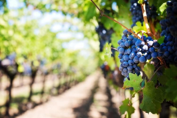 Την κατάργηση του ΕΦΚ στο κρασί, εντός του 2017προανήγγειλε ο κ. Βαγγέλης Αποστόλου.