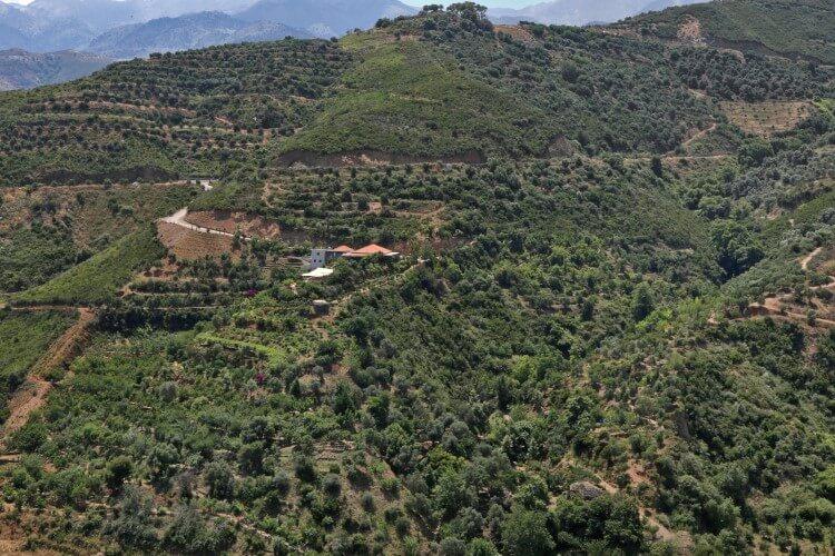 Η Περιφέρεια και το Πανεπιστήμιο Κρήτης στηρίζουν την καλλιέργεια αρωματικών φυτών