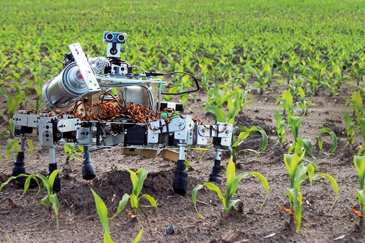 Το μέλλον της γεωργίας βρίσκεται στα… ρομπότ;