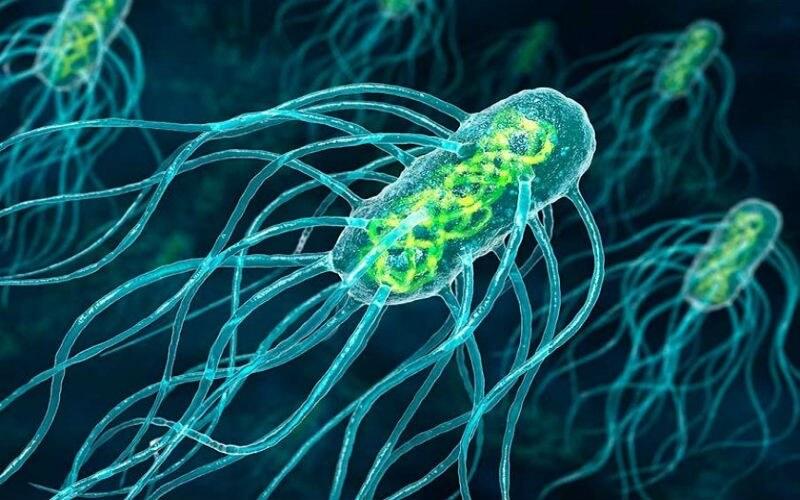 Σαλμονέλα: 5 τρόποι για την πρόληψη της