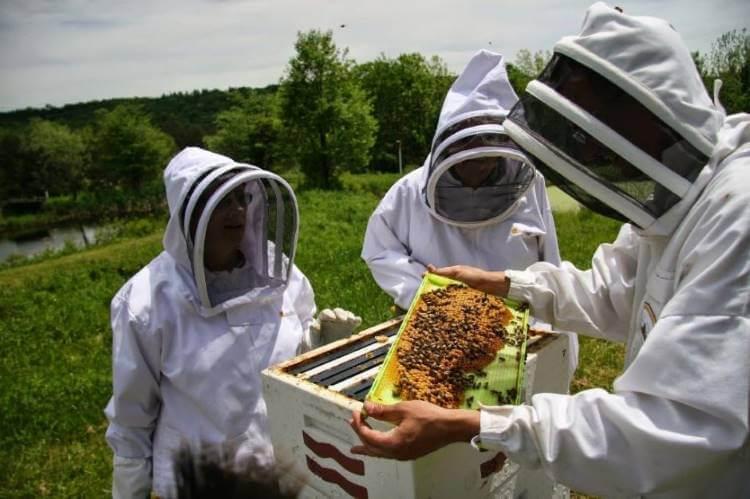 Μελισσοκομοι