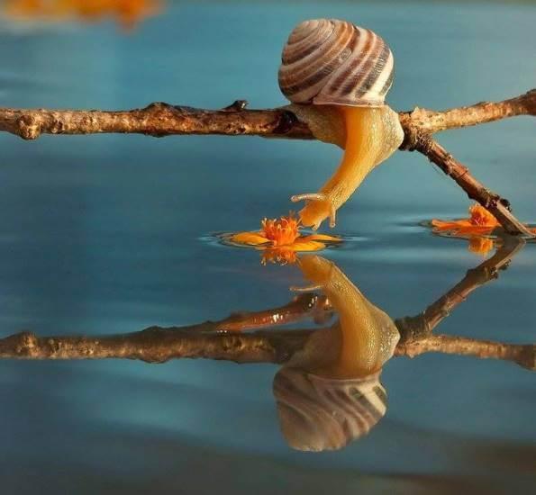 mastic snails1
