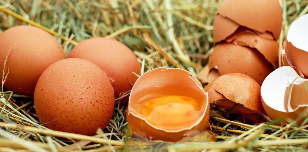 Θετικές εξελίξεις για τον κλάδο του αυγού