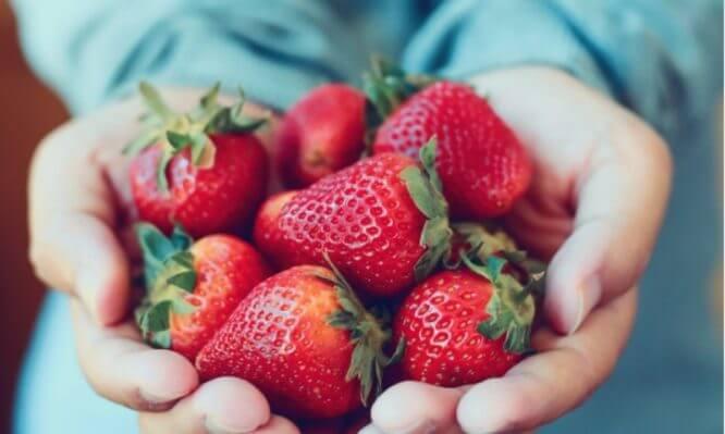Οι βελτιωμένες γενετικά ποικιλίες που υπόσχονται φράουλα και τον χειμώνα στην Ελλάδα